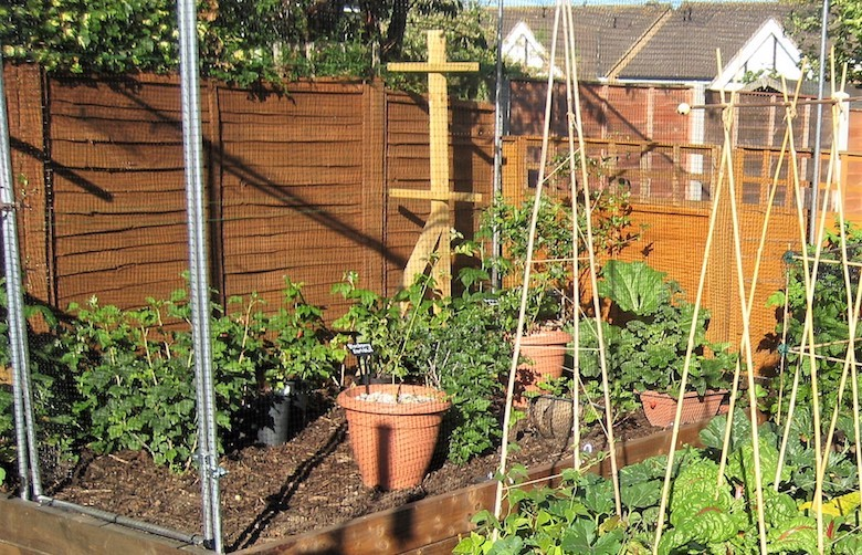 Nic Wilson's soft fruit growing area with obelisks and pots