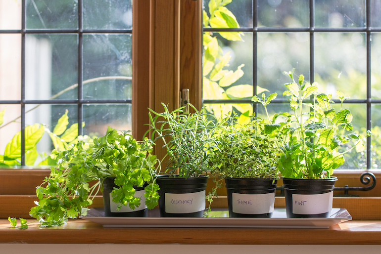 Pots of Rosemary, Thyme, Mint and Coriander on a windowsill
