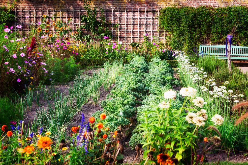 late summer vegetable garden with full rows and flowers in bloom