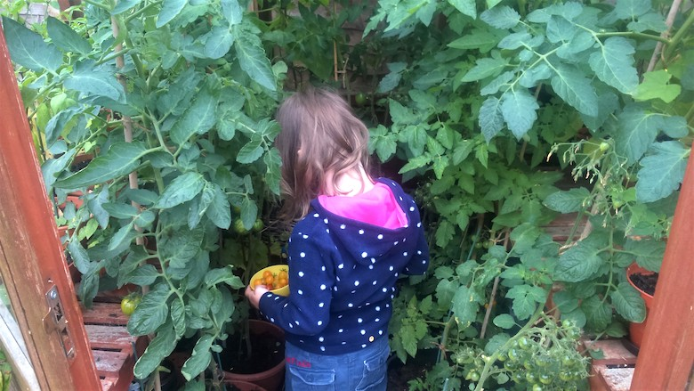 Child standing amongst tomato plants - photo from dogwooddays