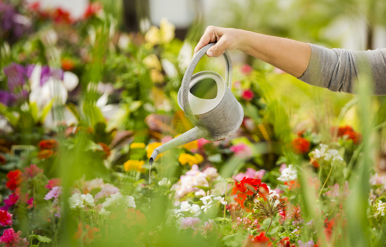 Hand holding watering can pouring water over a flowerbed