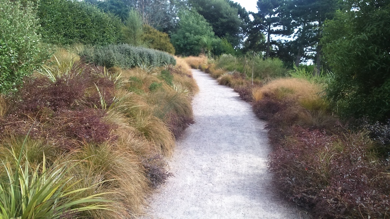 Carex testacea and pittosporum planting scheme from dogwooddays