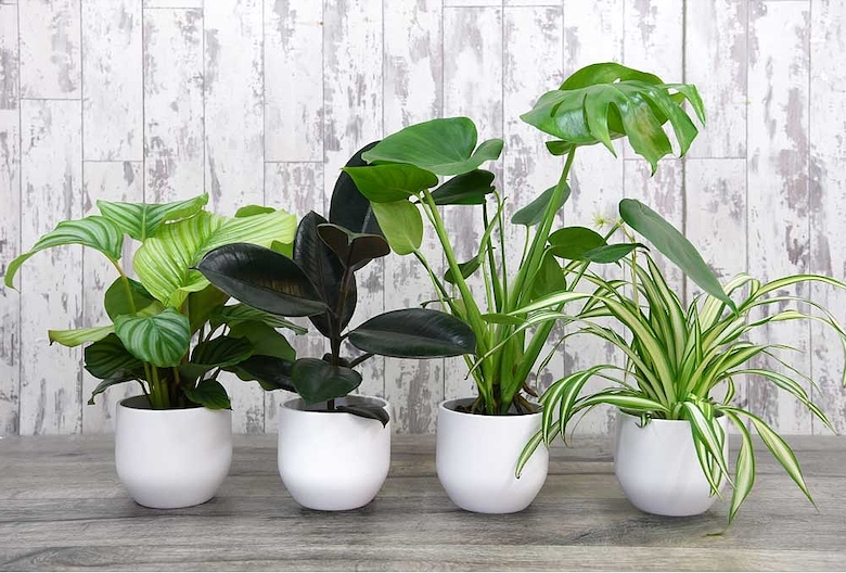 T&M urban jungle house plant collection