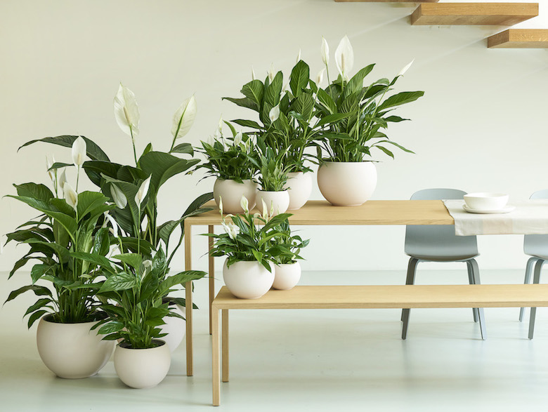 Collection of houseplants from Chanel de Koch (TheJoyOfPlants)