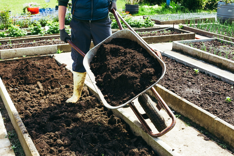 Gardener with compost in a wheelbarrow