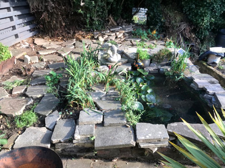 Pete's pond with newly planted plants