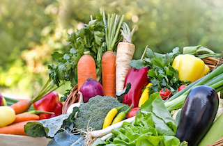 Vibrant veg growing blogs
