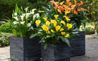Light up your garden with yellow: the colour of the year