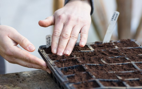 Hand sowing perennial seeds