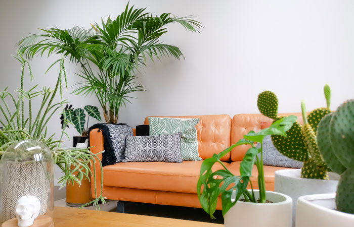 House plants in a bright room