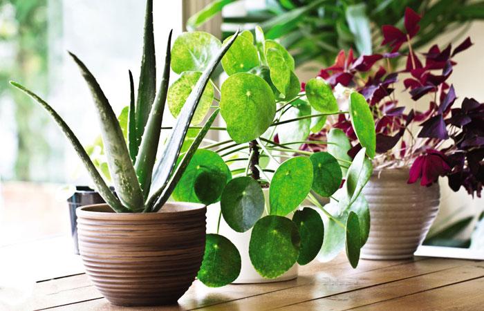 plants on a sunny windowsill