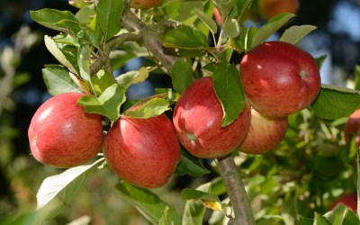 Apples masterclass: best expert content