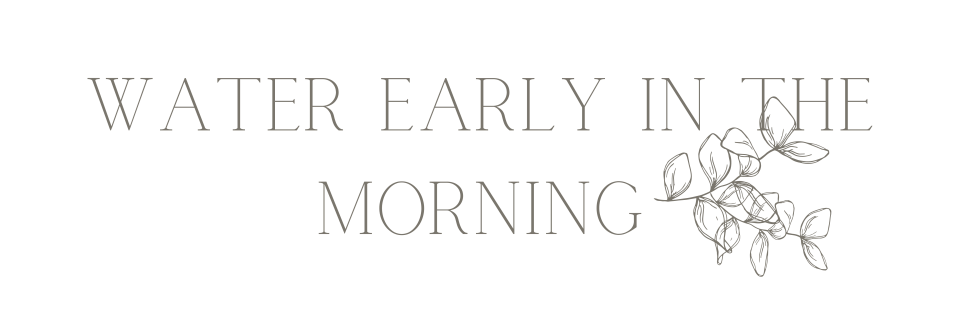 """""""Water early in the morning"""" text"""