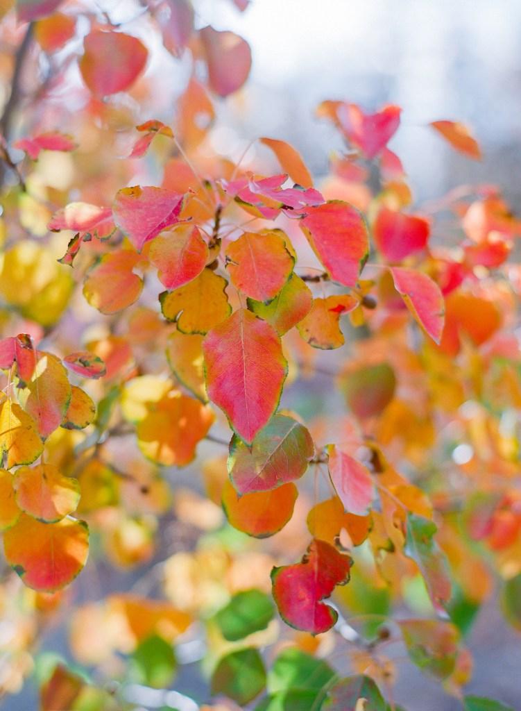 Beautiful trees from Creekside Tree Nursery featured on the Those Plant Ladies blog.