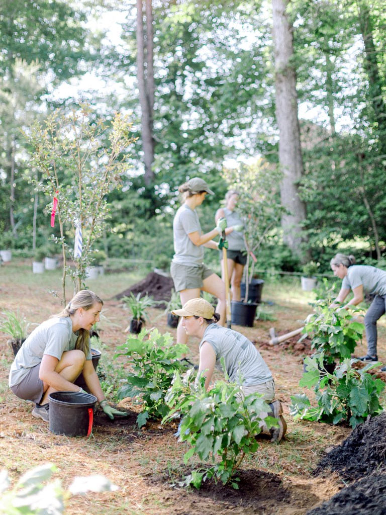 Those Plant Ladies installation crew installing oakleaf hydrangeas; showcased on the Those Plant Ladies blog as the featured plant for June.