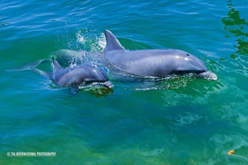 Dolphin Research Center. Marathon, Florida.
