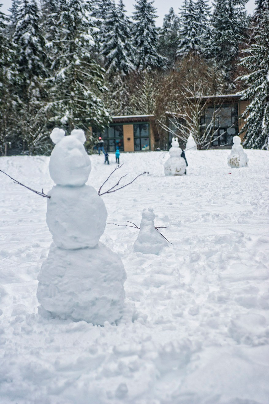 Snowmen at Discovery Park, Magnolia, Seattle (February 14, 2021).
