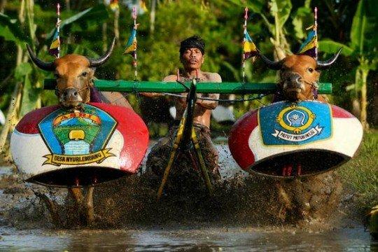 Sumber : http://lombokwandertour.com/