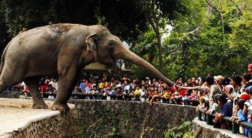 gajah ragunan
