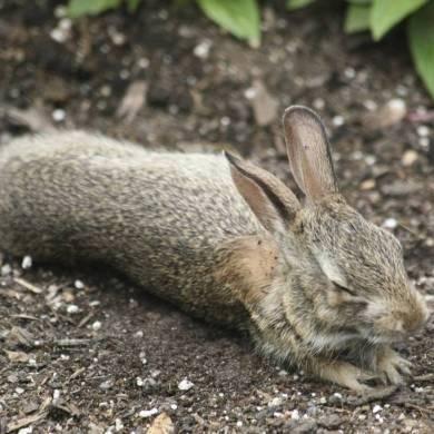 Tiny Rabbit Hole - Tiny Rabbit Hole's New Year Resolution