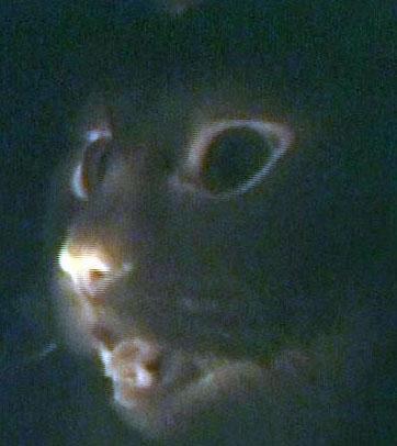 https://i2.wp.com/blog.tmcnet.com/blog/tom-keating/images/glow-in-dark-cats.jpg