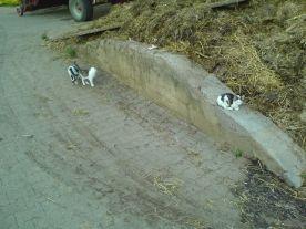 Katzen auf der Mauer