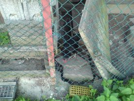 Hühner im Stall