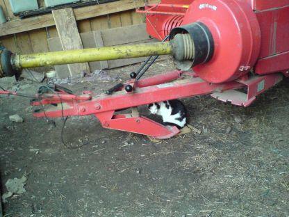Katze unter der Heupresse