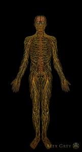 Рисунок Алекса Грея позволяет хотя бы отдаленно представить себе, насколько наше тело пронизано нервами