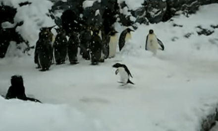 Video of the Week: Happiest Penguin Ever