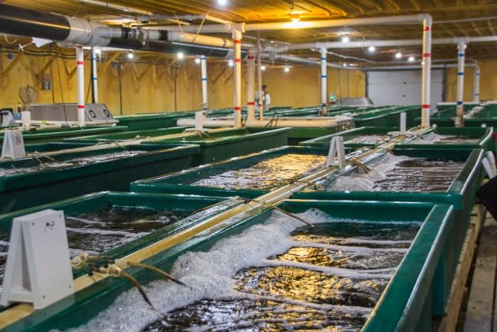 VeroBlue Farms fish tanks, Webster City Barramundi, Credit: Midwest Wanderer