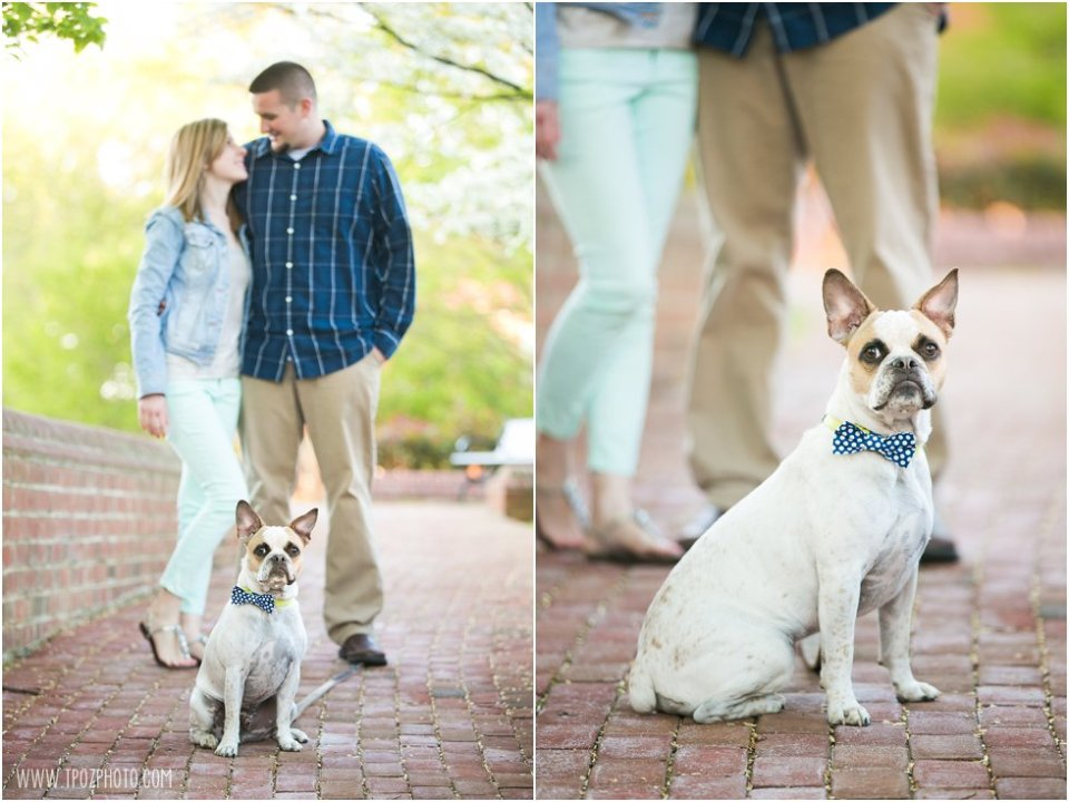 doggies Annapolis Maryland Engagement Session