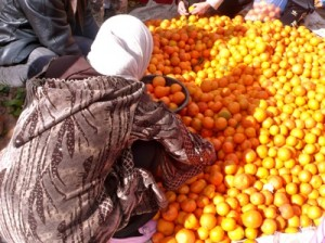 Woman Picking Oranges at Sunday Souk Ouarzazate, Morocco