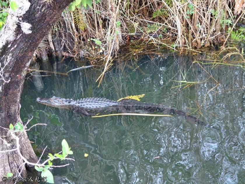 大沼澤地國家公園Everglades National Park