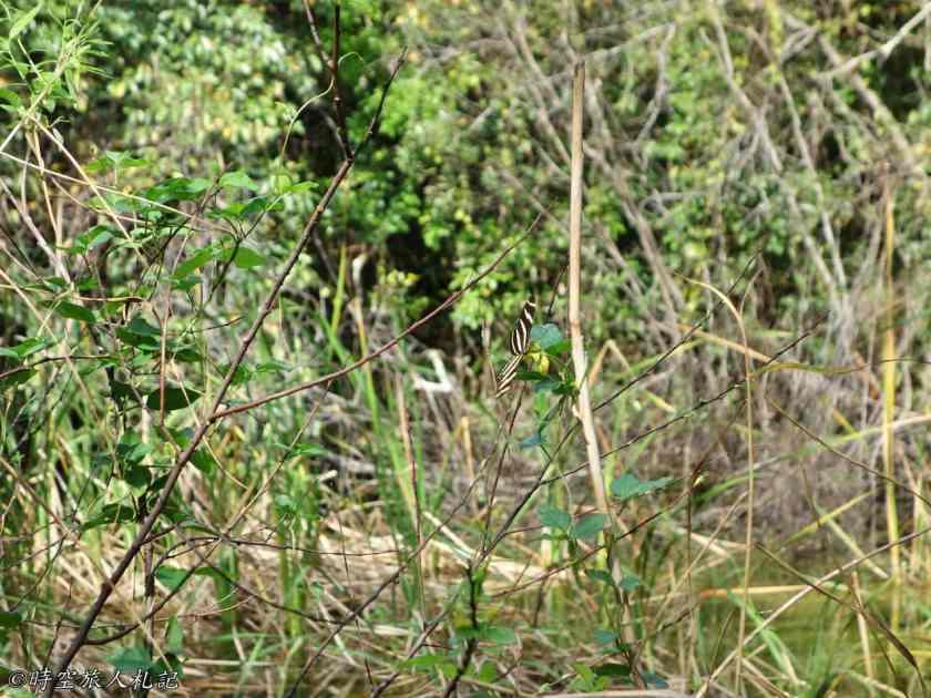 大沼澤地國家公園 10