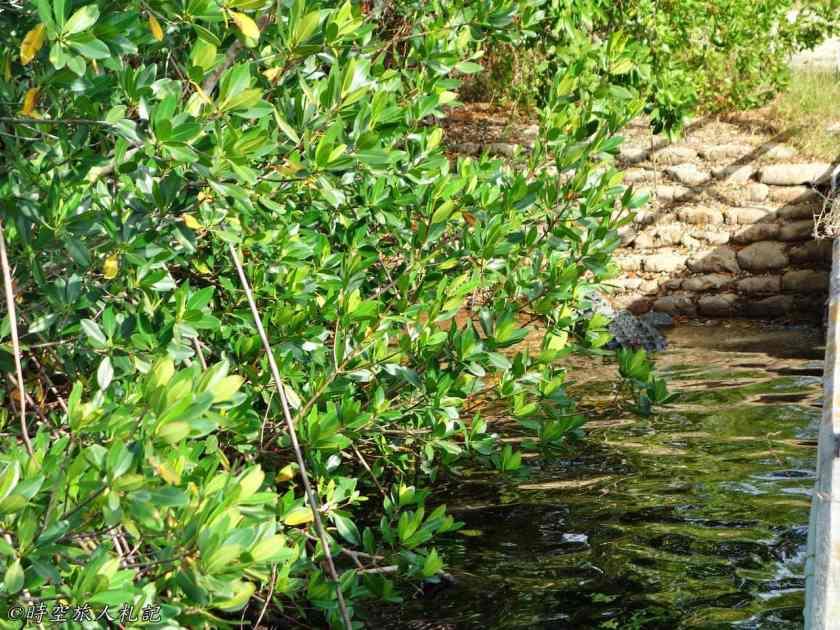大沼澤地國家公園 19