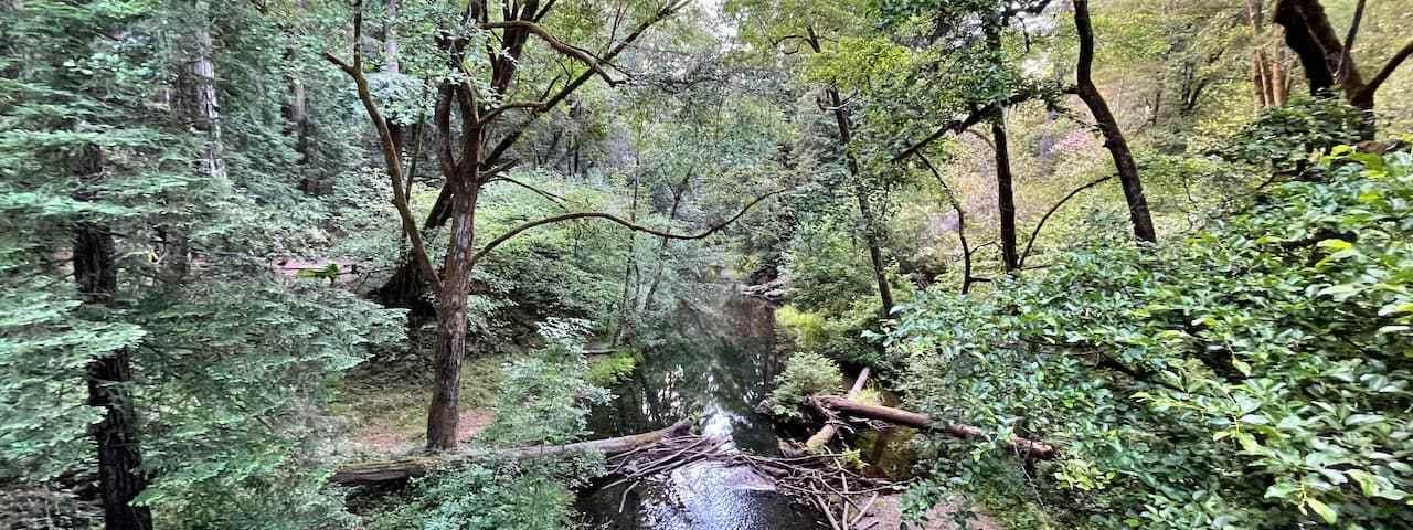 Samuel P Taylor State Park 1
