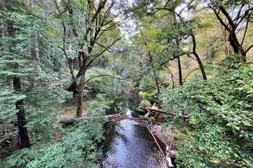 Samuel P Taylor State Park 6