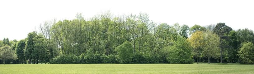 Shelterbelt planting tree line