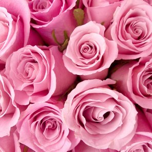 special_pink_roses-wide