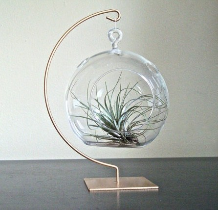 loving-air-plants-15