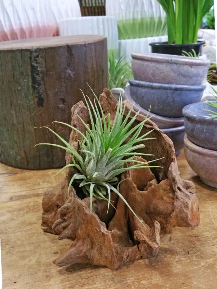 sb-bhm-diy-planters-wood-air-plant
