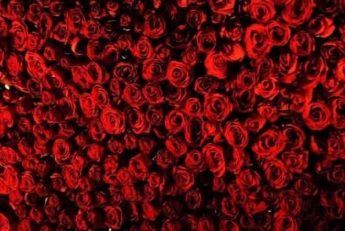 bed-of-roses.jpg