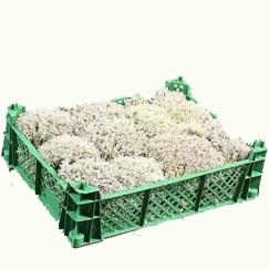 decorative-silver-moss-wholesale