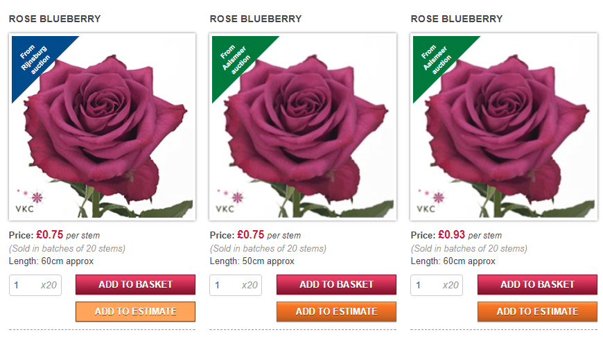 Rose Bluberry.png