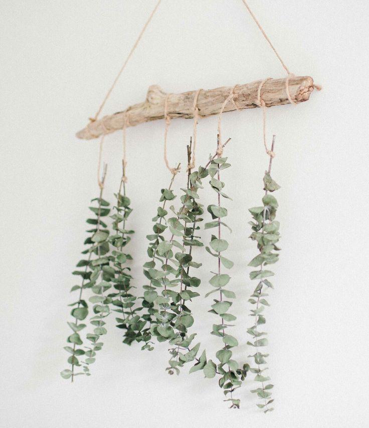 99a460efe943e0f030f62805570191d7--display-ideas-eucalyptus