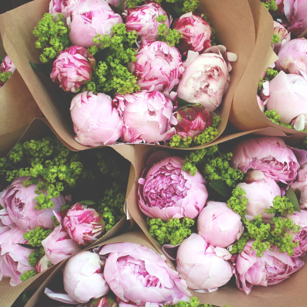 Peonies in May - Wholesale Flowers Direct UK