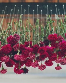 Carnations -Triangle Nursery