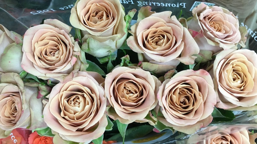 Buy Cappuccino Roses online at Triangle Nursery