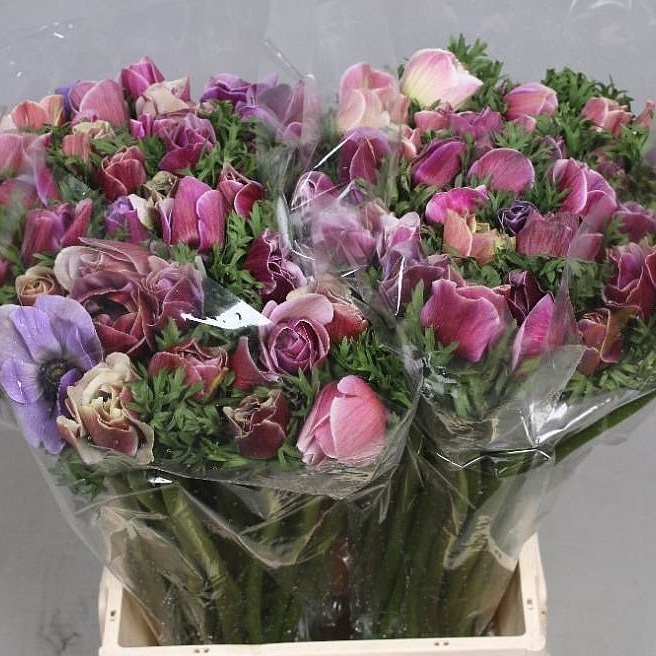 November Blooms to Market!